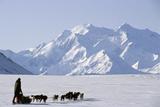 Sled Dogs  Park Ranger  Mount McKinley  Denali National Park  Alaska  USA