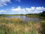 View of Eco Pond  Everglades National Park  Florida  USA