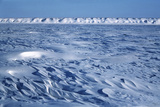 Wind Blown Snowdrift  Arctic Coastal Plain  Alaska  USA