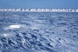 Wind Blown Snowdrift  Arctic Coastal Plain  Alaska  USA