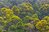 Rainforest  Pico Bonito National Park  Honduras