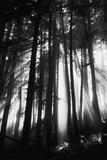 Sunlight Through Trees  Mount Rainier National Park  Washington  USA