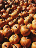 View of Pumpkins in Autumn  Northeast Kingdom  Vermont  USA