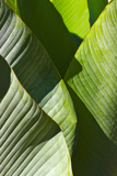 Palm Tree Flora  Pico Bonito National Park  Honduras