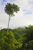 Rainforest in Pico Bonito National Park  Honduras
