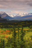 Alaska Range in Autumn  Taiga  Tundra  Denali National Park  Alaska  USA