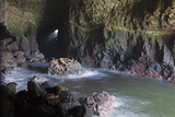 Sea Lion Caves  Resting Sea Lions  Oregon  USA