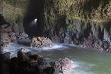 Sea Lion Caves  Resting Sea Lions  Oregon  USA