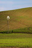 Spring in Palouse Country with Weathervane  Washington  USA