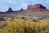 Wildflowers with Red Sandstone Monuments  Monument Valley Tribal Park  Arizona  USA