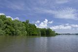 Dense Mangrove Forest Along the Brunei River  Brunei  Borneo