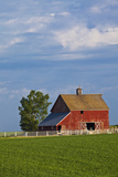 Red Barn in Spring Wheat Field  Washington  USA