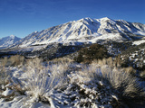 View of Snow-Covered Mountain with Bushes  Eastern Sierra Range  California  USA