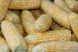 Fresh Corn at a Farmers' Market  Savannah  Georgia  USA