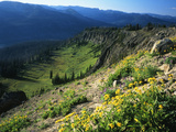 Wildflowers Along Continental Divide  Wyoming  USA