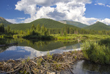 Beaver Pond Along the Flathead River Near Fernie  British Columbia  Canada