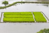 Rice Terraces  Agriculture  Philippine Cordilleras  Banaue  Ifugao  Philippines