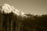 Mt Rainier with Trees  Mt Rainier National Park  Washington  USA