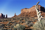 Yucca Plant with Sandstone Monument  Monument Valley Tribal Park  Arizona  USA