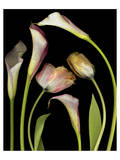 Flower Garden Tulips & Callas