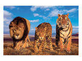 Three Big Cats