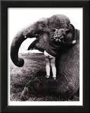 John Drysdale (An Elephant Never Forgets) Art Poster Print