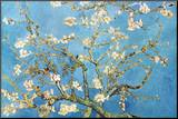 Almond Branches in Bloom  San Remy  c 1890
