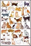 Cats of the World Educational Science Chart Poster