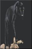Black Panther (On Log) Art Poster Print