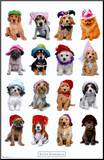Puppies with Hats