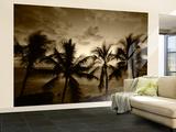 View Palm Trees on Beach  Big Islands  Kona  Hawaii  USA