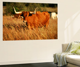 Longhorn Bull Wildlife  Oklahoma  USA