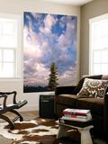 Afternoon Clouds on Hurricane Ridge  Olympic National Park  Washington State  USA