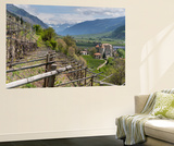 Vineyards in Spring  Castle Kastelbell  Valley Vinschgau  South Tyrol  Italy