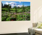 Subalpine Meadow  Mount Rainier National Park  Washington  USA