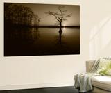 Bald Cypress Trees in Reelfoot Lake  Reelfoot National Wildlife Refuge  Tennessee  USA