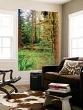 Rainforest  Olympic National Park  Washington State  USA