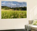 Karwendel Mountain Range  Mittenwald  Lake Wagenbruch  Wildflowers  Bavaria