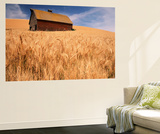 View of Barn Surrounded with Wheat Field  Palouse  Washington State  USA