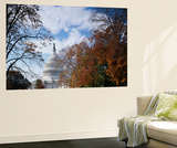 View of Capitol Building with Autumn Trees  Washington DC  USA
