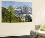 Sycamore Maple Trees  Spring  Eng Valley  Karwendel Mountain Range  Austria