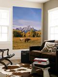Horses in Grand Teton National Park  Wyoming  USA