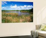 View of Eco Pond  Everglades National Park  Florida  USA