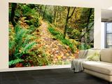 Autumn Bigleaf Maple Leaves  Columbia Gorge Scenic Area  Oregon  USA