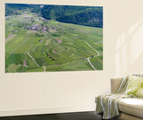 Apple Orchards  Farmland in Vinschgau  South Tyrol  Italy