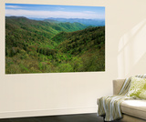 Thomas Divide  Great Smoky Mountains National Park  North Carolina  USA