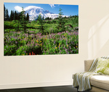 Subalpine Meadow  Mount Rainier National Park  Washington  USA