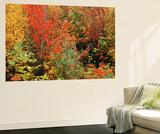 Fall Foliage  Northeast Kingdom  Vermont  USA