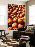 View of Pumpkins in Autumn  Northeast Kingdom  Vermont  USA