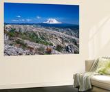 Mt Adams from Windy Ridge  Mt St Helens Volcanic National Monument  Washington  USA